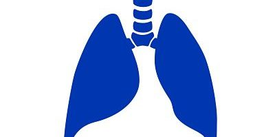 lungs smaller size